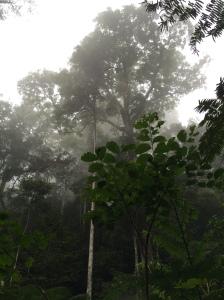 Masuk hutan kayak Jendral Soedirman